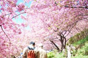 松田桜まつり2のコピー